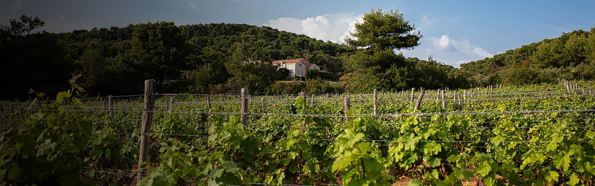 Boškinac vinogradi